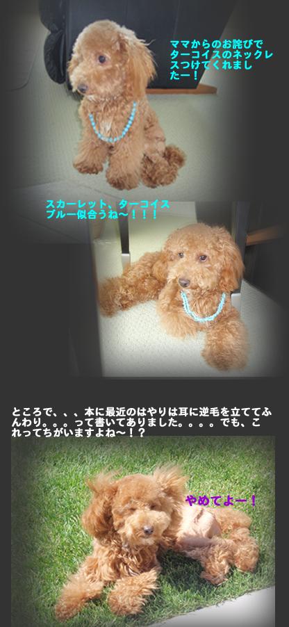c0164491_864423.jpg