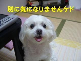 f0145192_15121626.jpg