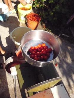 ヌンツィオ叔父さんのトマトソース製造機_f0106597_1627541.jpg