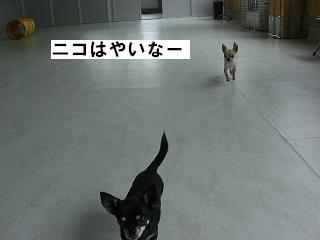 ブログ担当者へ告ぐ(エース・ニコ)_f0170713_11504958.jpg