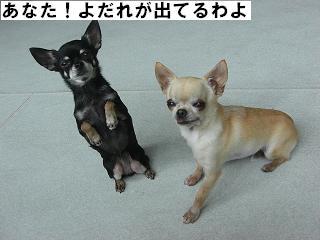 ブログ担当者へ告ぐ(エース・ニコ)_f0170713_115158.jpg