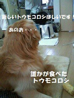 b0127531_20391438.jpg