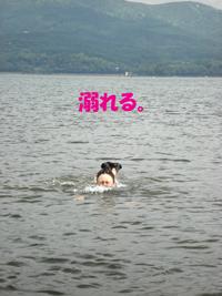 f0132070_1313112.jpg