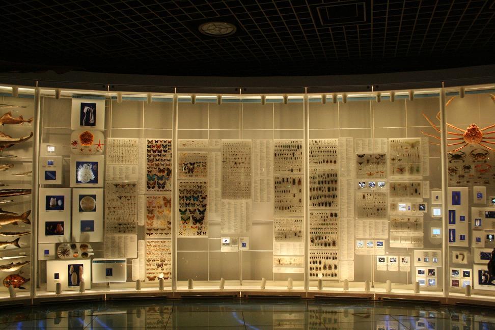 国立科学博物館    ~ハッチョウトンボの大きさ~_a0107574_2316321.jpg