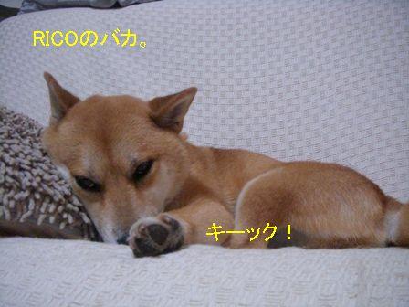 b0158035_18213717.jpg
