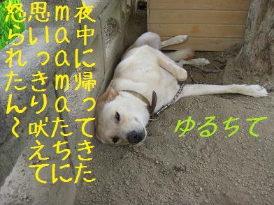 b0151748_1602724.jpg