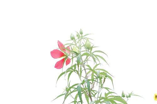 夏の花_e0000951_23134380.jpg