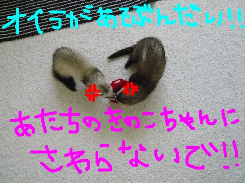 c0165472_1922349.jpg