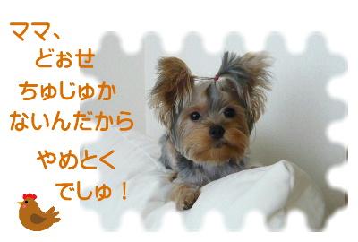 f0018384_15274723.jpg