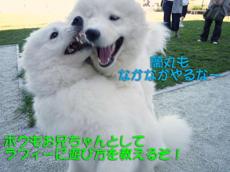 b0146024_2011922.jpg