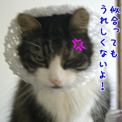 c0024830_1954270.jpg