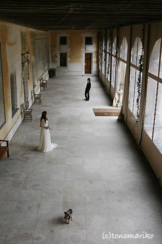 結婚式でおじゃま犬_c0024345_944279.jpg