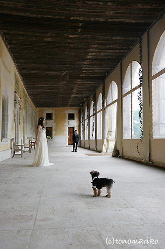 結婚式でおじゃま犬_c0024345_94626.jpg