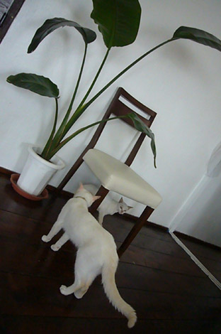 mysterious kitty._c0153966_21102568.jpg