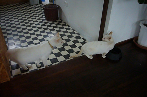 mysterious kitty._c0153966_21152532.jpg