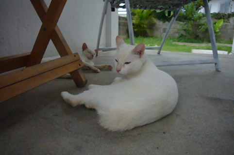 mysterious kitty._c0153966_21342211.jpg