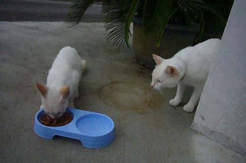 mysterious kitty._c0153966_21365511.jpg