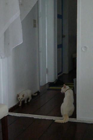 mysterious kitty._c0153966_2165693.jpg