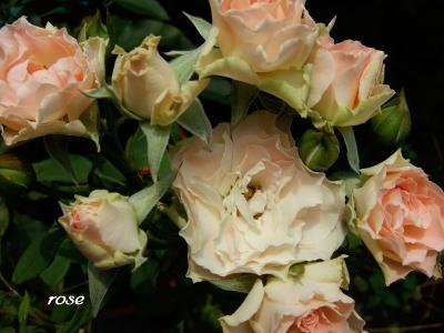 また咲きました♪_d0091671_7565650.jpg