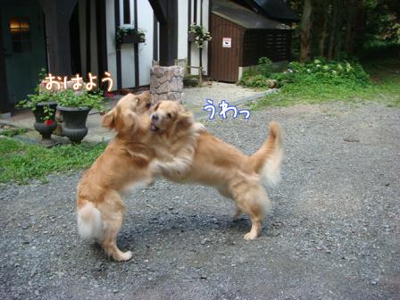 子供は大きくなり、犬は小さくなって・・・_f0064906_16331260.jpg