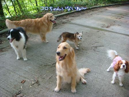 子供は大きくなり、犬は小さくなって・・・_f0064906_16411920.jpg