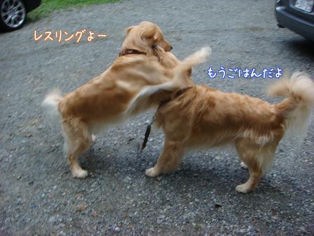 子供は大きくなり、犬は小さくなって・・・_f0064906_16433498.jpg
