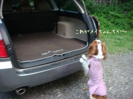 子供は大きくなり、犬は小さくなって・・・_f0064906_16461556.jpg