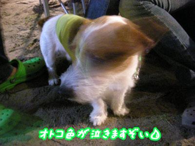 f0129214_9194687.jpg