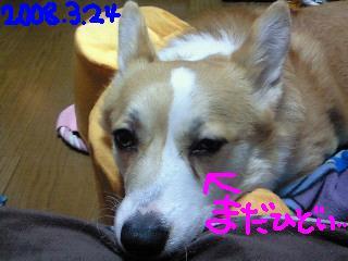 c0134720_1383874.jpg