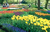 もしもピアノが弾けたなら(11) ~アムステルダムの陽だまり~_b0102572_1634320.jpg
