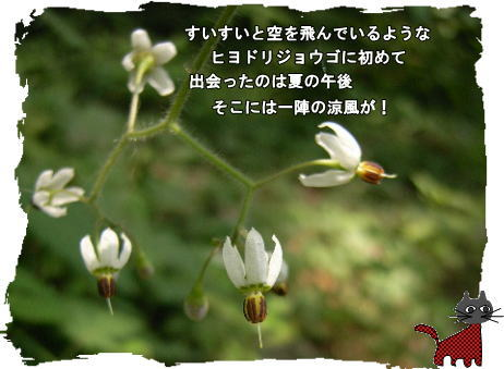 f0137096_22353465.jpg