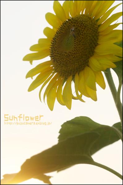 夏の花_f0100215_22444100.jpg