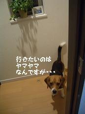 b0098660_21344266.jpg