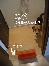b0098660_21353921.jpg