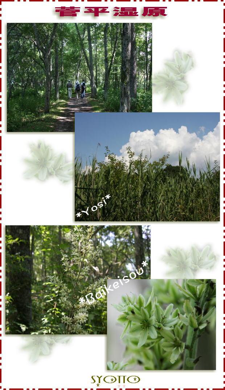 f0164592_10344324.jpg