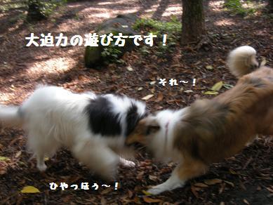 f0081100_1722227.jpg