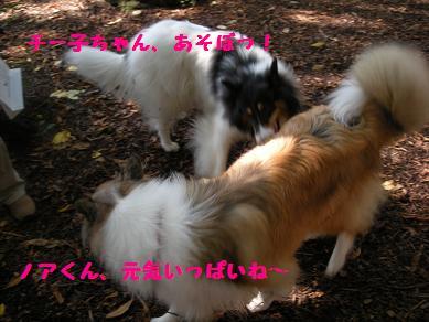 f0081100_17225724.jpg