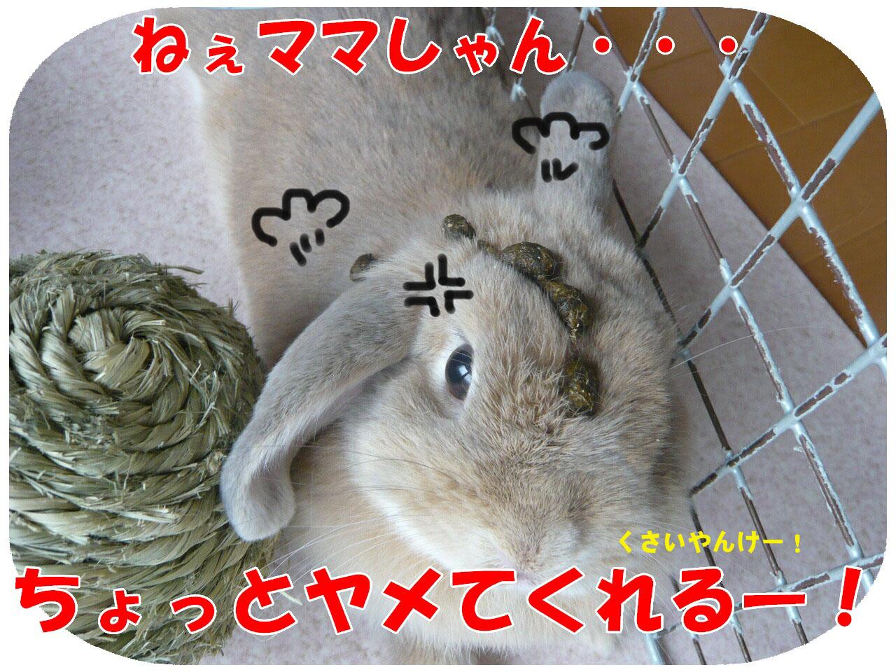 c0151439_21115664.jpg
