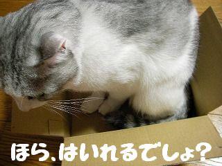 b0044447_0265979.jpg