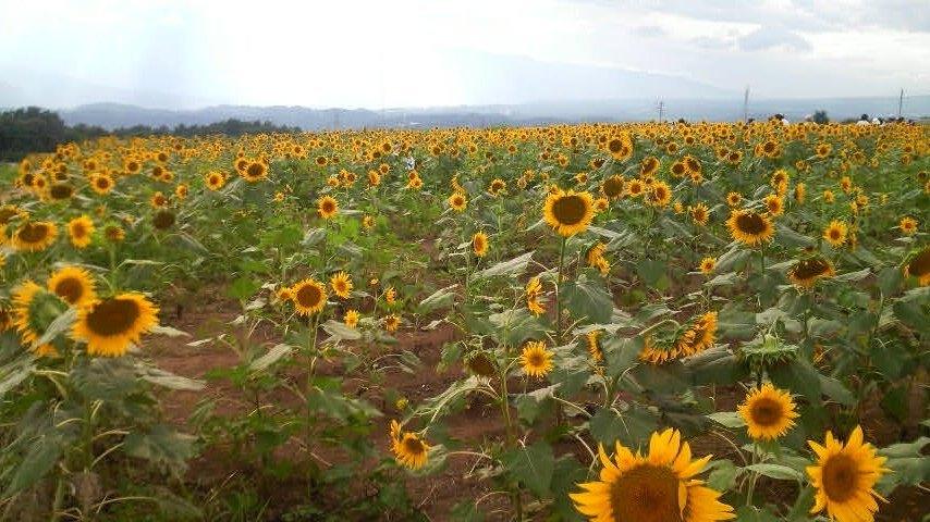 夏の花といえば・・・_f0028256_2102399.jpg