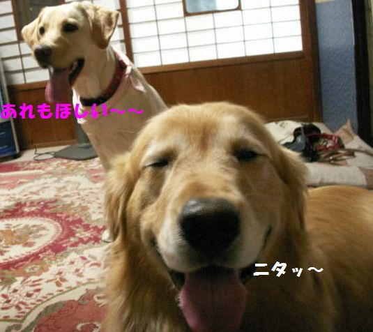 b0127531_00782.jpg