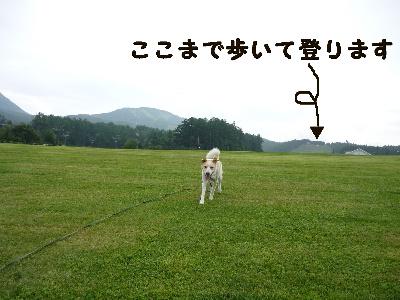 d0140133_1919101.jpg