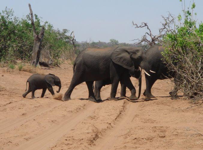 リズム*父&母(おじいちゃん&おばあちゃん) アフリカの旅_d0145934_7511664.jpg