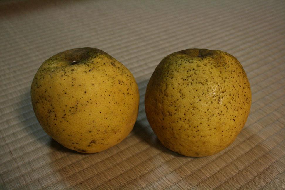 ジューシーレモン(?オレンジ)_a0107574_1131654.jpg