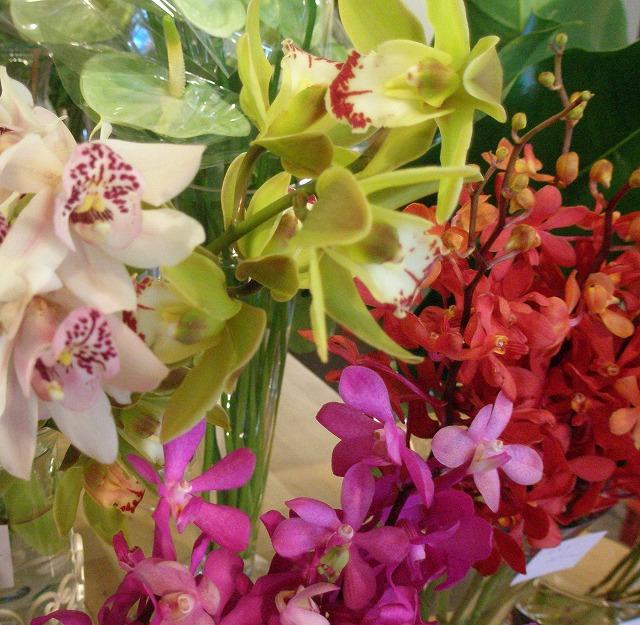 orchid_e0130779_11314563.jpg