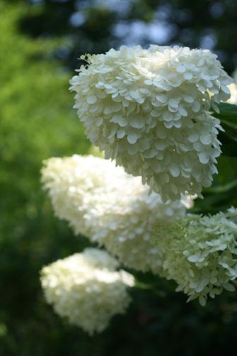 garden friends_b0081419_3102392.jpg