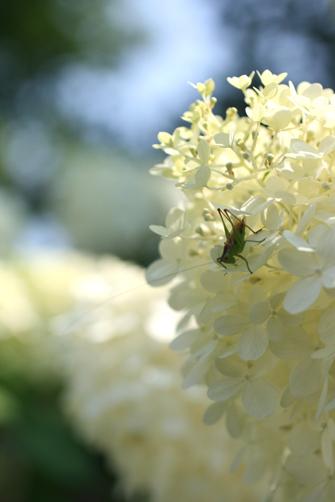 garden friends_b0081419_3104920.jpg