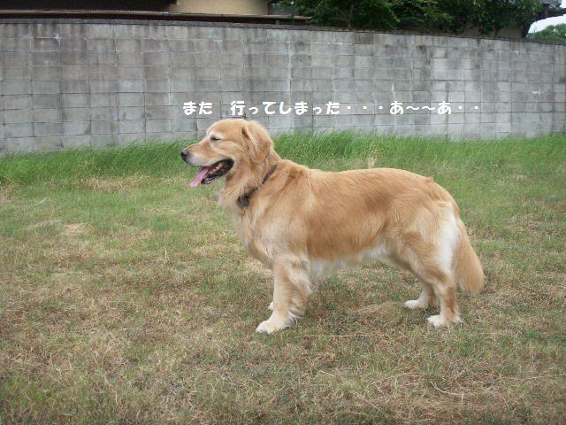b0127531_015354.jpg