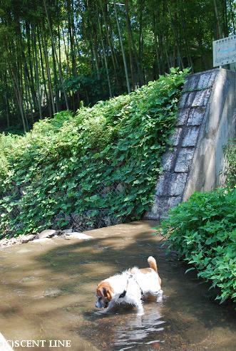 京都での夏休み_c0099133_1429533.jpg
