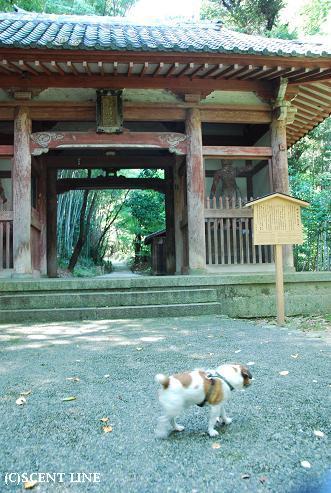 京都での夏休み_c0099133_14363289.jpg